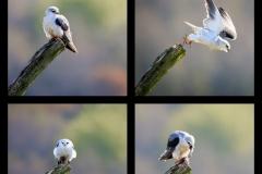 Deze foto's zijn gemaakt door Homme Zwiep